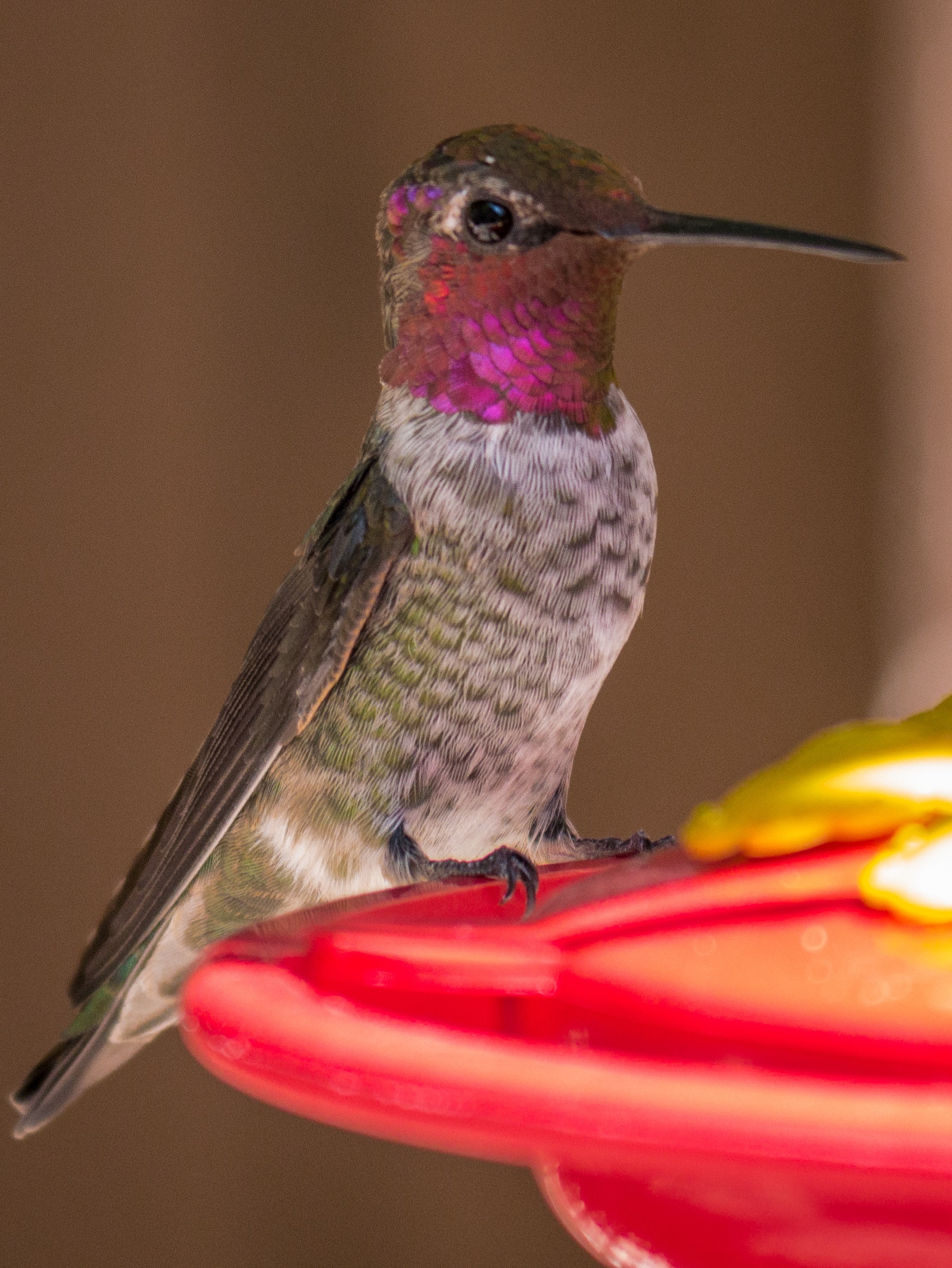 Hummingbirds-1010924